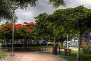 Фото Парки Испания Скамья Дерева HDRI Канары Лас-Пальмас-де-Гран-Канария Природа