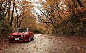 Обои БМВ Сезон года Осень Дороги Красный Листва авто