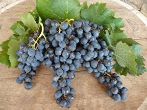 Обои Фрукты Виноград Листва Ветка Продукты питания