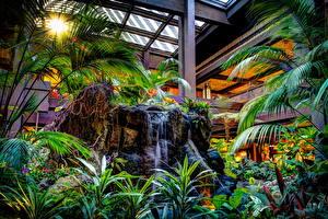 Обои Парки Камни Водопады Диснейленд Листья Пальмы HDR Калифорния Природа фото