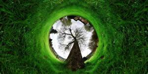 Обои Оригинальные Зеленых Траве Деревья Абстрактный ландшафт