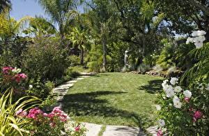 Фото Сады Ландшафтный дизайн Трава Пальм Газон Природа