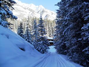 Фотографии Сезон года Зимние Парки Гора Канада Снега Дерева Ель Банф Природа