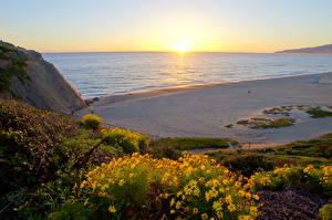 Картинка Побережье Море Рассветы и закаты Пляж Горизонт Калифорнии Малибу Природа Цветы