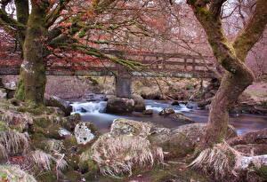 Обои Река Камень Англия Деревьев Мох Belstone Природа