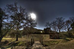 Фото Америка Небо Дерево HDR Калифорния Малибу Природа