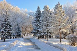 Обои Времена года Зимние Дороги Снег Деревья Ель Природа