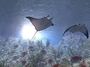 Картинка Подводный мир Скаты животное