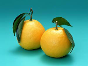 Картинка Фрукты Цитрусовые Апельсин