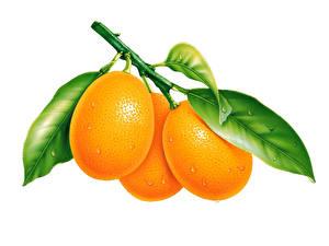 Фото Фрукты Цитрусовые Апельсин Белый фон Еда
