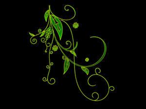Фотографии Растения Узоры Черный фон 3D Графика